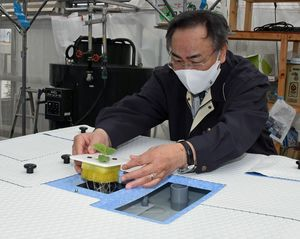 栽培槽にタカミの苗を定植する倉光市長