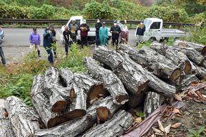 売却されるナラ枯れ被害木を確認する町民