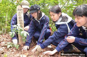 ブナを植樹する創価高校の生徒たち