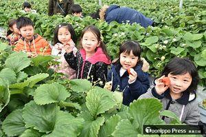 摘み取ったイチゴを手に笑顔を見せる園児たち