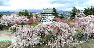 """静寂の中""""日本一の桜""""咲き誇る 弘前公園"""