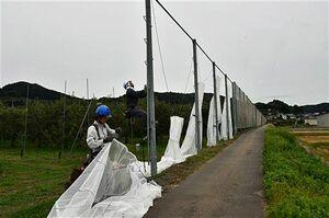 台風の接近を前に、リンゴ園地の防風ネットを新しく張り替える業者=22日午後1時15分ごろ、平川市広船