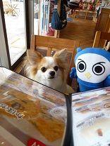 愛犬と一緒のランチは、「ドッグガーデンカフ…