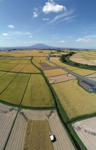 黄金色の津軽平野 稲刈り進む