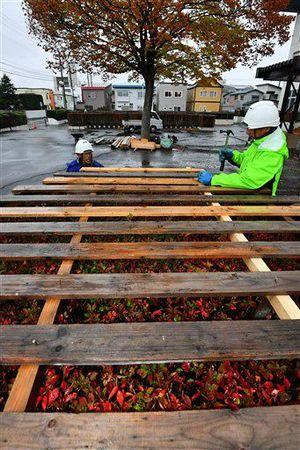 冷たい雨の中、雪囲いの作業を急ぐ造園業者=19日午前、青森市合浦2丁目