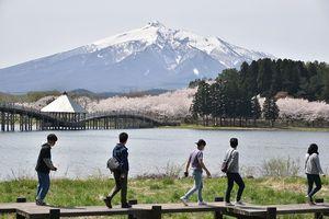 岩木山と湖、桜の共演が楽しめる「鶴の舞橋桜まつり」が始まった富士見湖パーク=24日、鶴田町