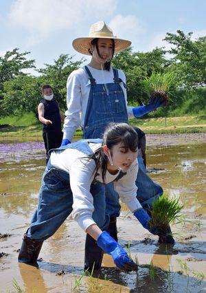 ぬかるむ足元に苦戦しながら田植えをするりんご娘のジョナゴールドさん(手前)とときさん