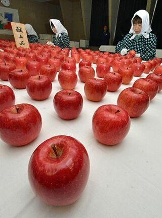 令和初の献上リンゴ 出来上々/黒石で選果