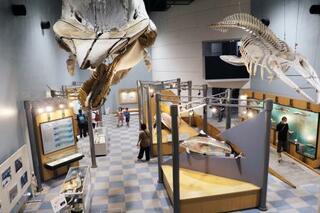 岩手のクジラ館、一部で再開
