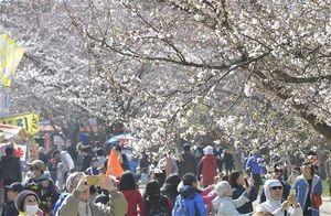 昨年の弘前さくらまつり。開幕初日から約8万人(まつり本部発表)の花見客でにぎわった=2019年4月20日午後、弘前公園四の丸付近