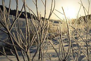 冷え込み、氷の結晶がびっしりと付いた草木=28日午前7時ごろ、平川市碇ケ関の津刈川