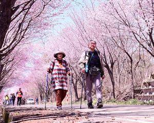 満開を迎えた桜並木のトンネルを歩く参加者たち=弘前市の岩木山麓