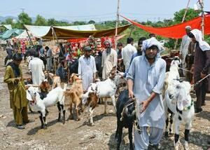 パキスタンの首都イスラマバード郊外の市場で家畜を売る人々=7月(共同)