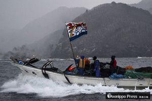 旗の合図とともにマダラの漁場へ走りだす漁船=7日午前7時、むつ市脇野沢の貝崎沖