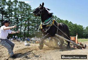 引き手と呼吸を合わせ、障害の山を駆け上がる出走馬