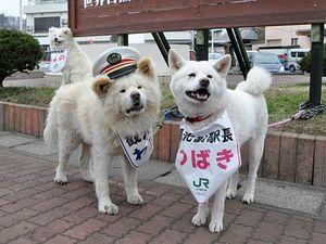 観光駅長に就いたわさお(左)と仲むつまじかった副駅長のつばき。左奥はちょめ=2018年4月1日、JR鯵ケ沢駅前