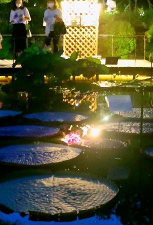 夜に咲く花を歩いて観察、高知