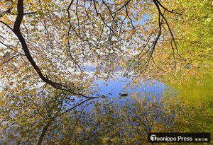 【最優秀賞】「湖畔の桜」(松林操さん)