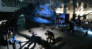 青森大恐竜展でナイトミュージアム/迫力を満喫