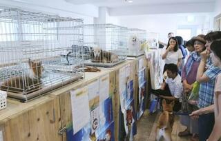動物愛護の施策、各党とも重視