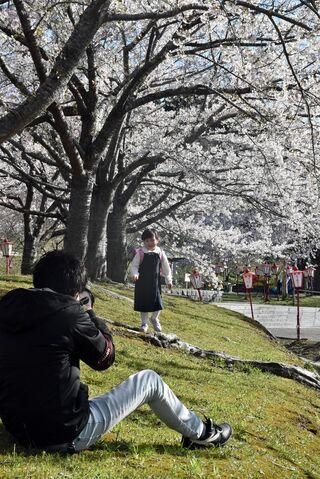 愛宕公園の桜 記念写真撮影が人気/野辺地
