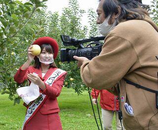 青森県産リンゴ、台湾へ オンラインでPR/県りん対協