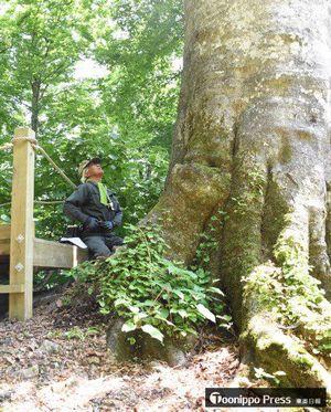 マザーツリーを診断する斎藤さん。幹の状態や周辺の土壌などを調べた=28日午前