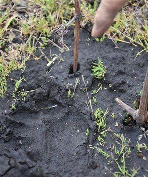 畑から約30メートル南に残る足跡