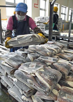 八戸港に水揚げされた2航海目の船凍アカイカ=11日午前8時17分、同港第3魚市場C棟