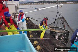 ツアーに向け、メンバーがモニター漁などで準備を進めた=2017年11月(海峡ロデオ大畑提供)