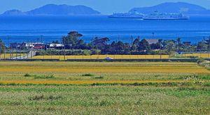ソバ畑の白い花と黄金色の田んぼが青い海に映えて見える=19日午前、蓬田村郷沢