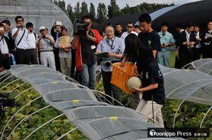 実際にメロンの収穫を行ってみせた五農生たち