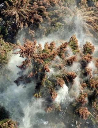花粉、中国地方で多めか