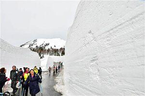 昨年の八甲田ウォークで雪壁の間を歩く参加者。今年は新型コロナウイルス感染拡大を受け、中止を決めた