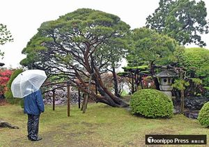 春の一般公開が始まった八戸南部氏庭園