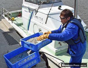 湖の氷が解けた区域で採取したシラウオとワカサギを漁船から運び出す関係者=15日、東北町船ケ沢