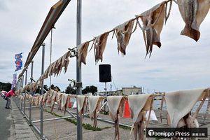 生干しイカのカーテンは全長100メートルに達し、新記録を達成した