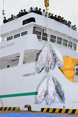 青森丸からクレーンで水揚げされる船凍マグロ=18日午前9時50分ごろ、八戸港