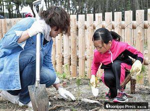 クロマツの苗木を植える参加者たち