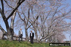 30年前、慰霊のため植えられた桜。満開間近の木々を川口さん(左)と小向さんが見上げる=20日午後、おいらせ町いちょう公園の多目的グラウンド脇