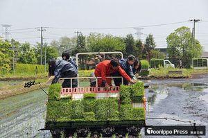 七戸町で農作業を体験する台湾の修学旅行生=2015年5月(県提供)