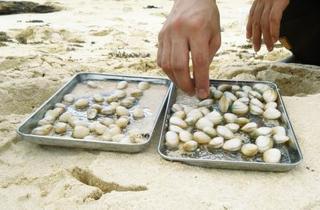 微小プラスチック汚染、貝に蓄積