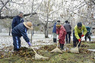 黒星病を農福連携で防除/弘前のリンゴ園