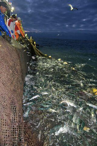 「網油臭い」漁見合わせも/八戸沖重油被害