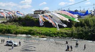 和歌山・九度山、こいのぼり悠然