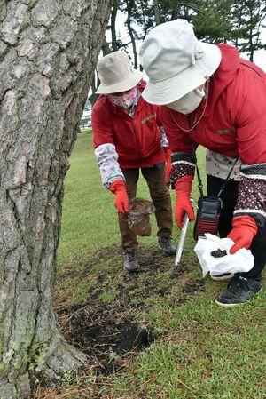松の木の根元に置き去りにされた犬のふんを片付ける種差観光協会のメンバー=16日午前10時半ごろ