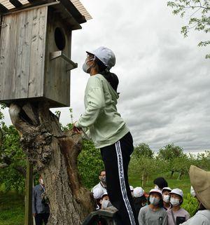 フクロウの巣箱の中をのぞく児童