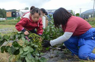 助成事業「あおもりの在来野菜の収穫&料理体験会~「農」から触れるあおもりのSDGs~」が開催されました
