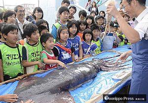 見慣れたイカとアメリカオオアカイカの大きさの違いに驚く子どもたち