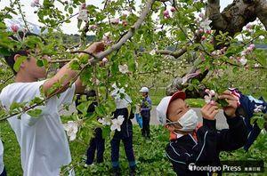 摘花の作業に取り組む児童生徒
